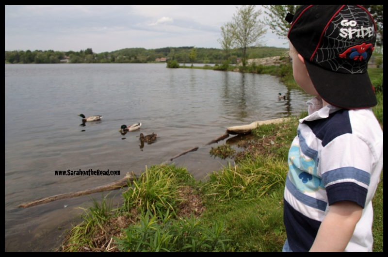 ducks and little boy