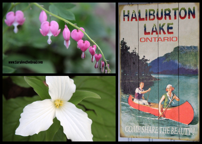 Flowers and Haliburton Lake sign