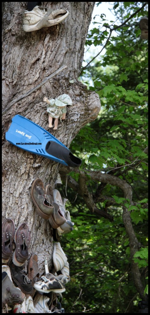flipper and doll on side of tree