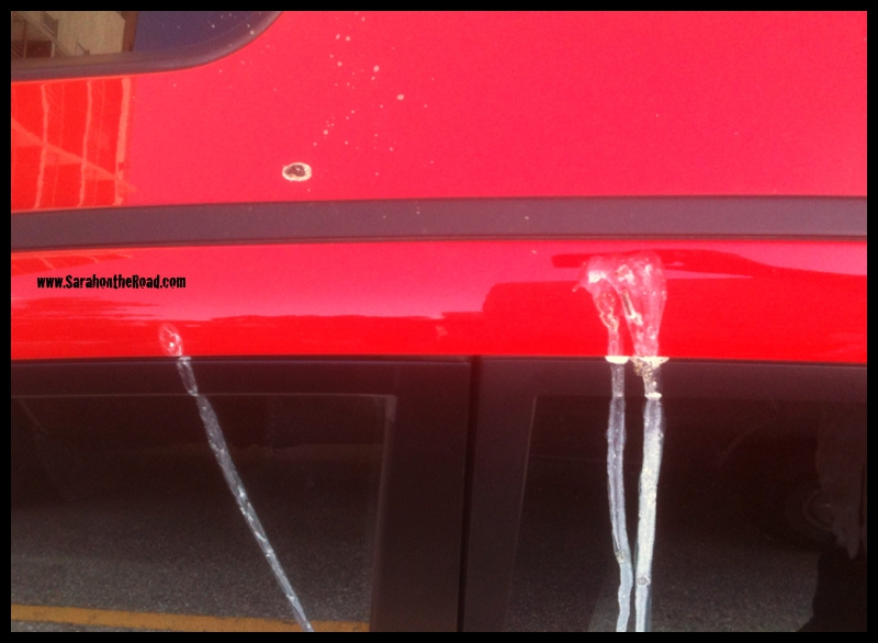 bird poo on car