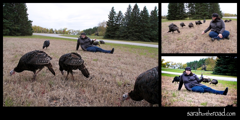 Sitting with the Turkeys