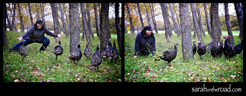 sneaking up on Turkeys 101