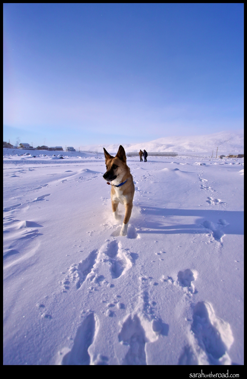 Dogs in the snow...