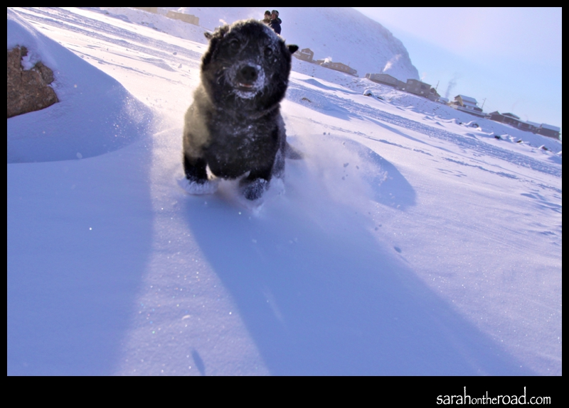 little dogs like the snow too!