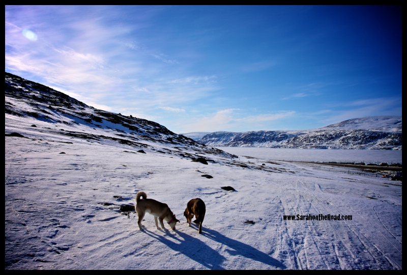 Walking with the Dogs 2