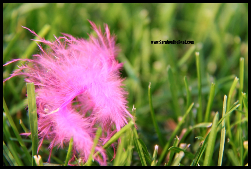 pink feather on grass